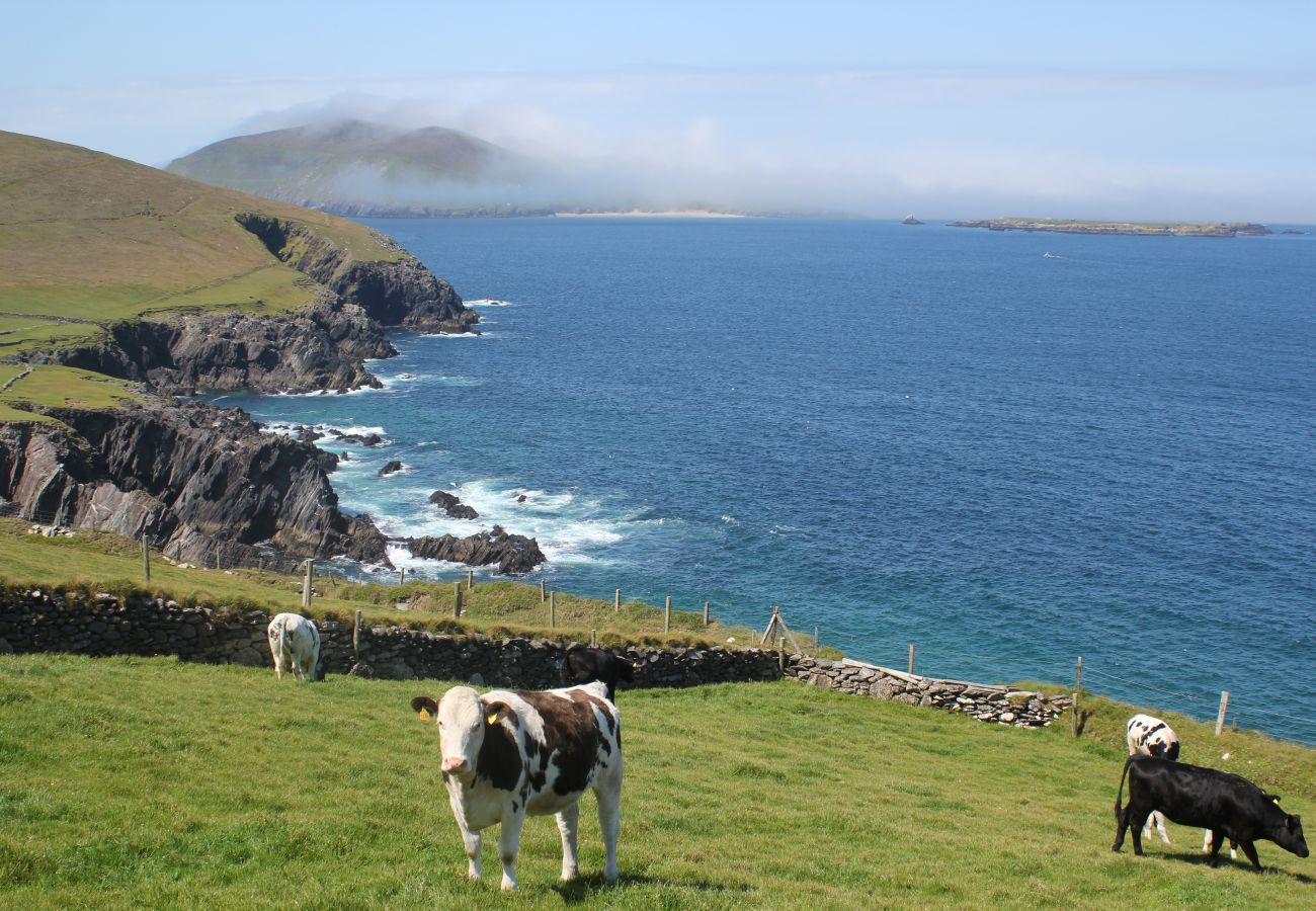 Gorgeous Views from Dingle Peninsula County Kerry Ireland