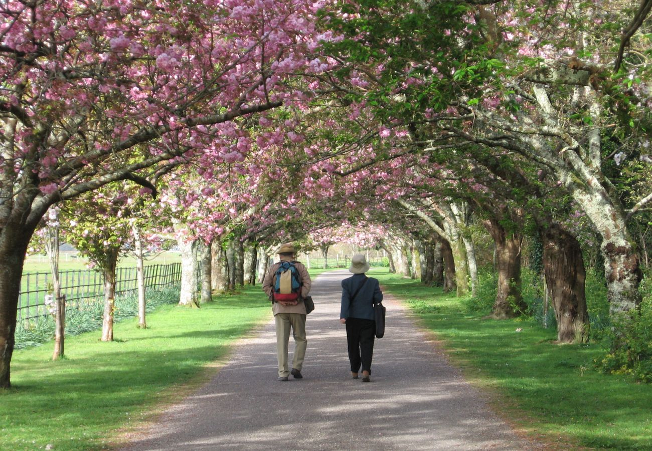Killarney National Park, Cherry Blossom Walk, Kerry, Ireland
