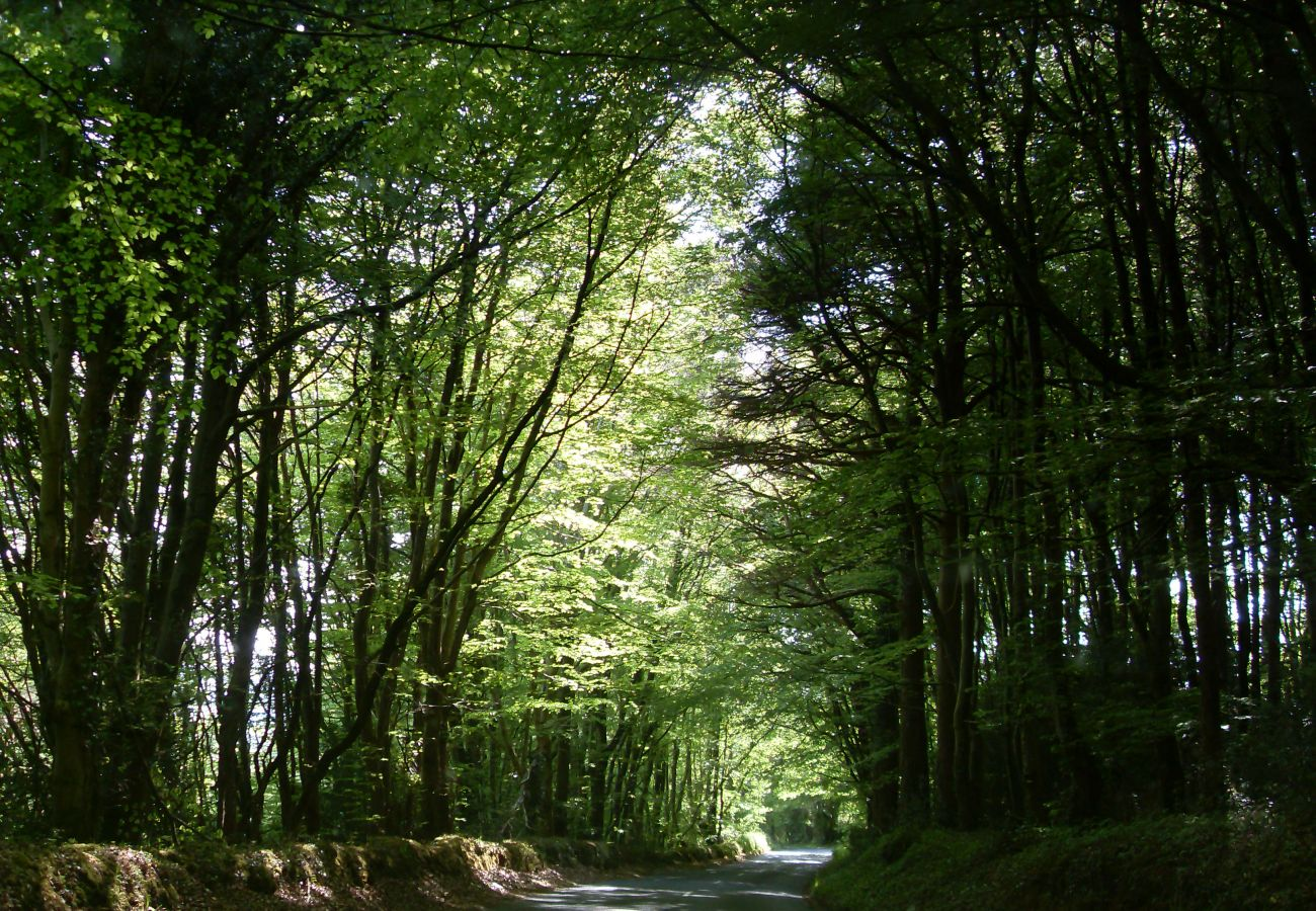 Glen of Aherlow, Tipperary Rd, County Tipperary