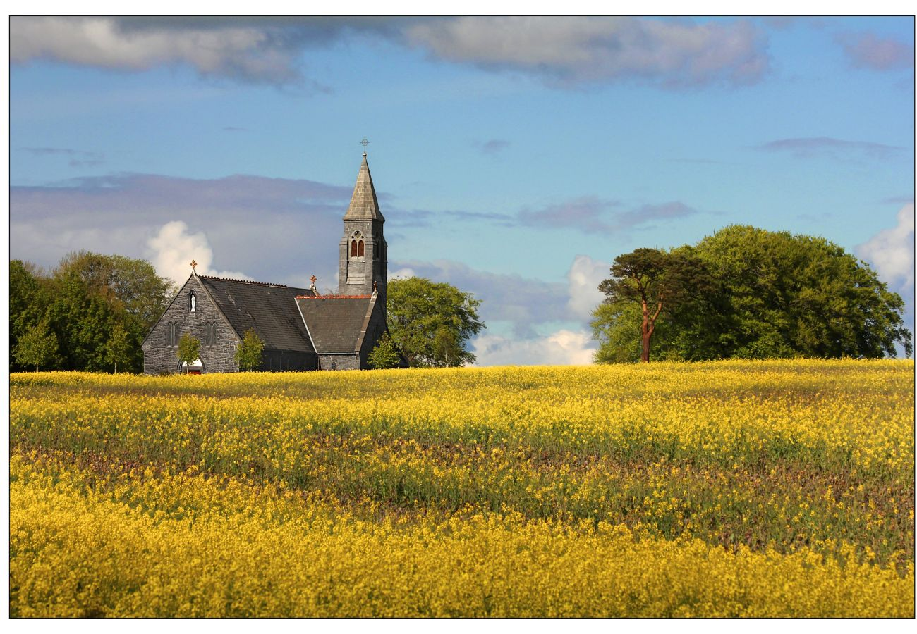 Fields of Gold, Terryglass, County Tipperary