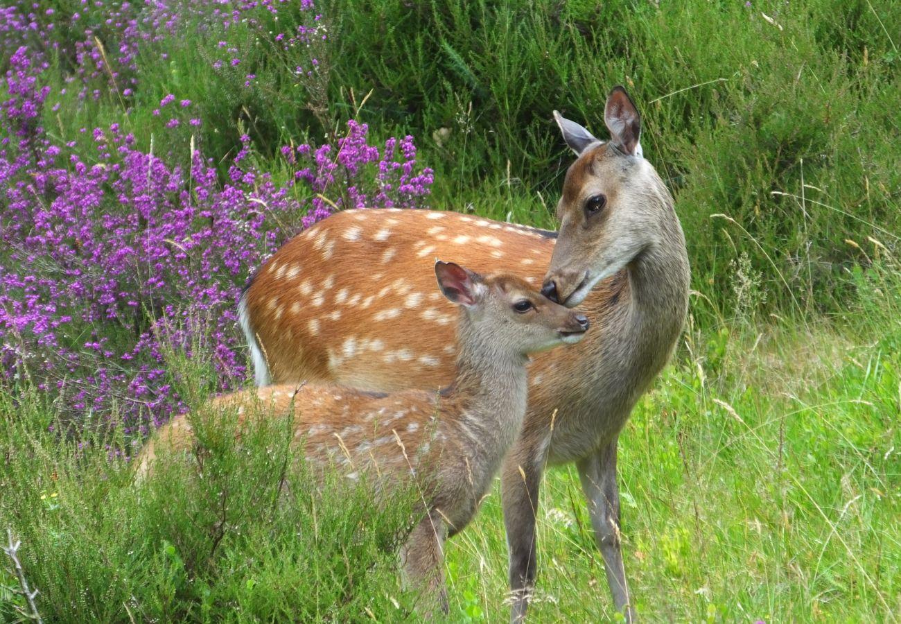 Glendalough Wild Deer Garden Of Ireland Wicklow Ireland