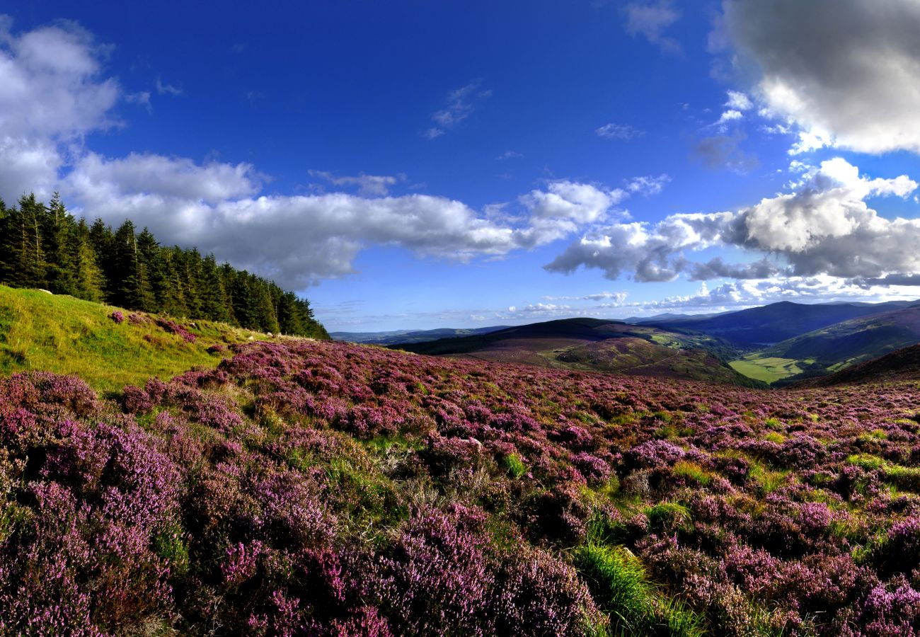 Beautiful Landscape of the Wicklow Hills, County Wicklow, Ireland