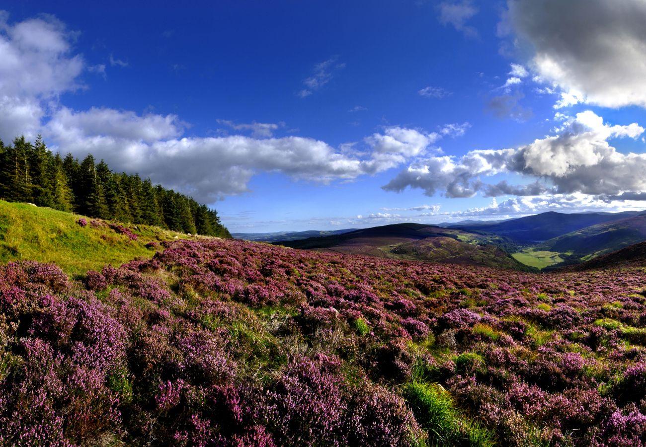 Beautiful Landscape of the Wicklow Hills, County Wicklow, Ireland