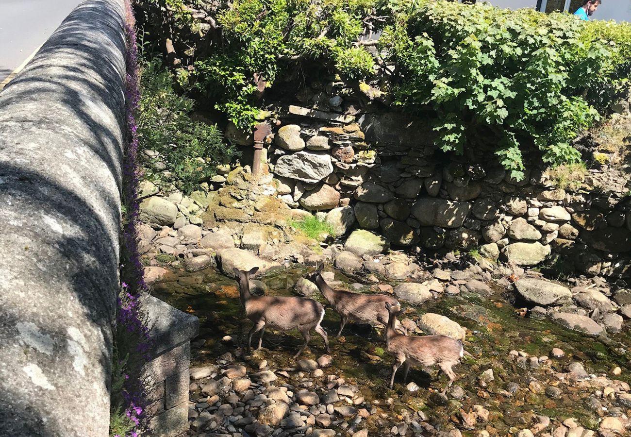 Deer at the River in Glendalough, County Wicklow, Ireland