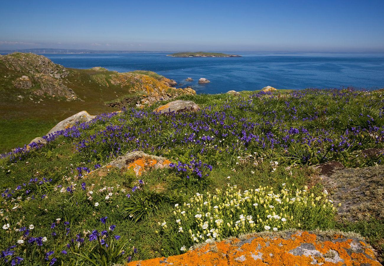 The Saltee Islands County Wrxford image Tourism Ireland