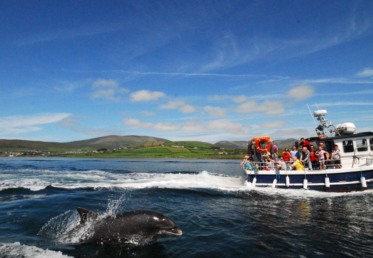 Fungi the Dolphin, Dingle County Kerry, Ireland