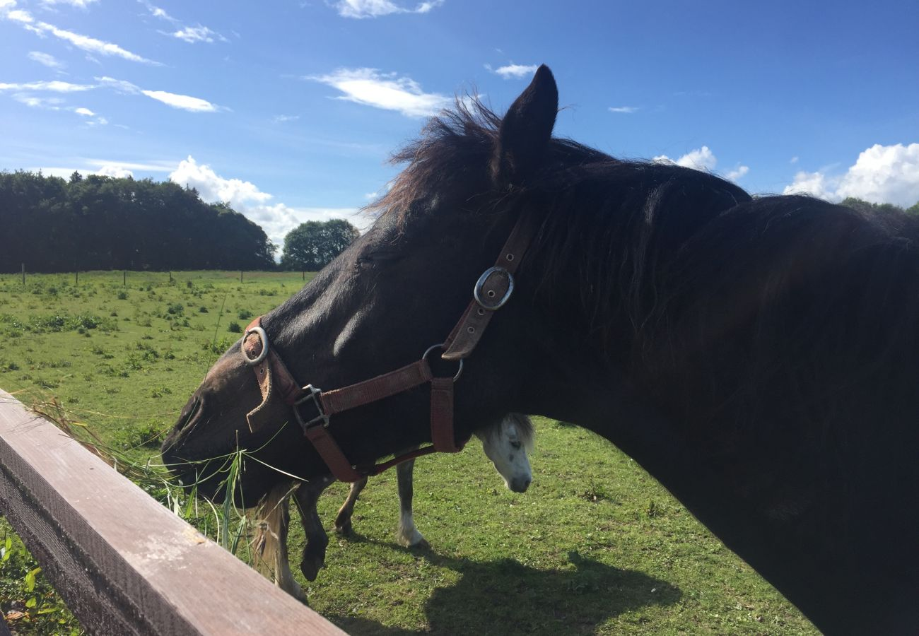 Horses at Castlemartyr Resort, County Cork, Ireland
