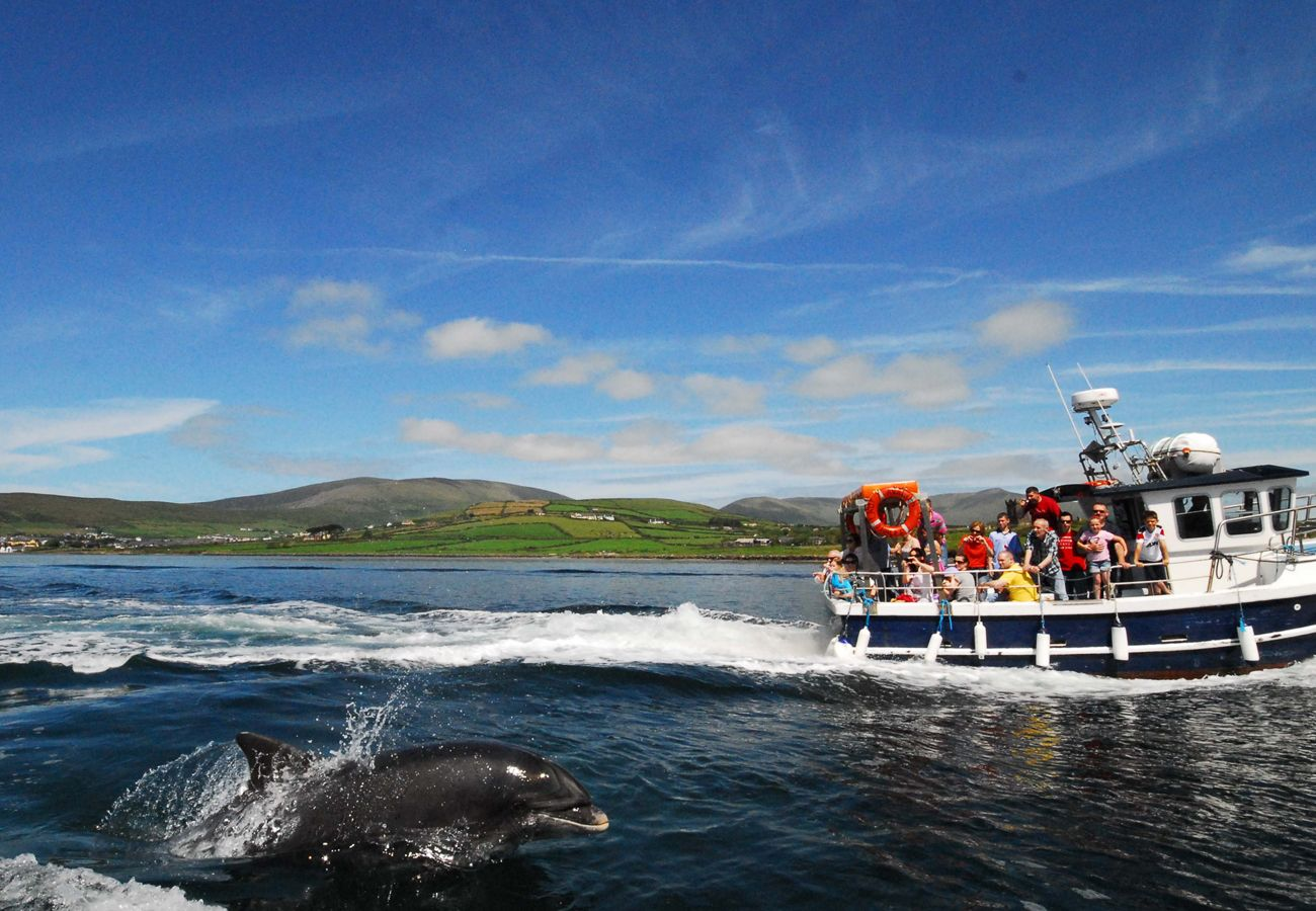 Fungi The Dolphin, Self Catering, Dingle, Kerry