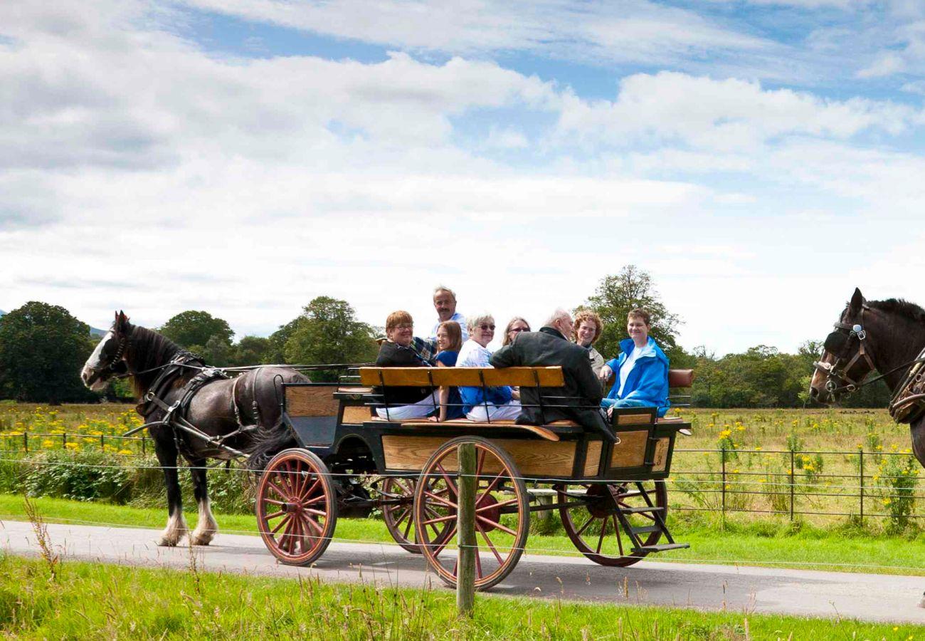 Killarney Jaunting Cars Kerry © Stephen Power & Tourism Ireland