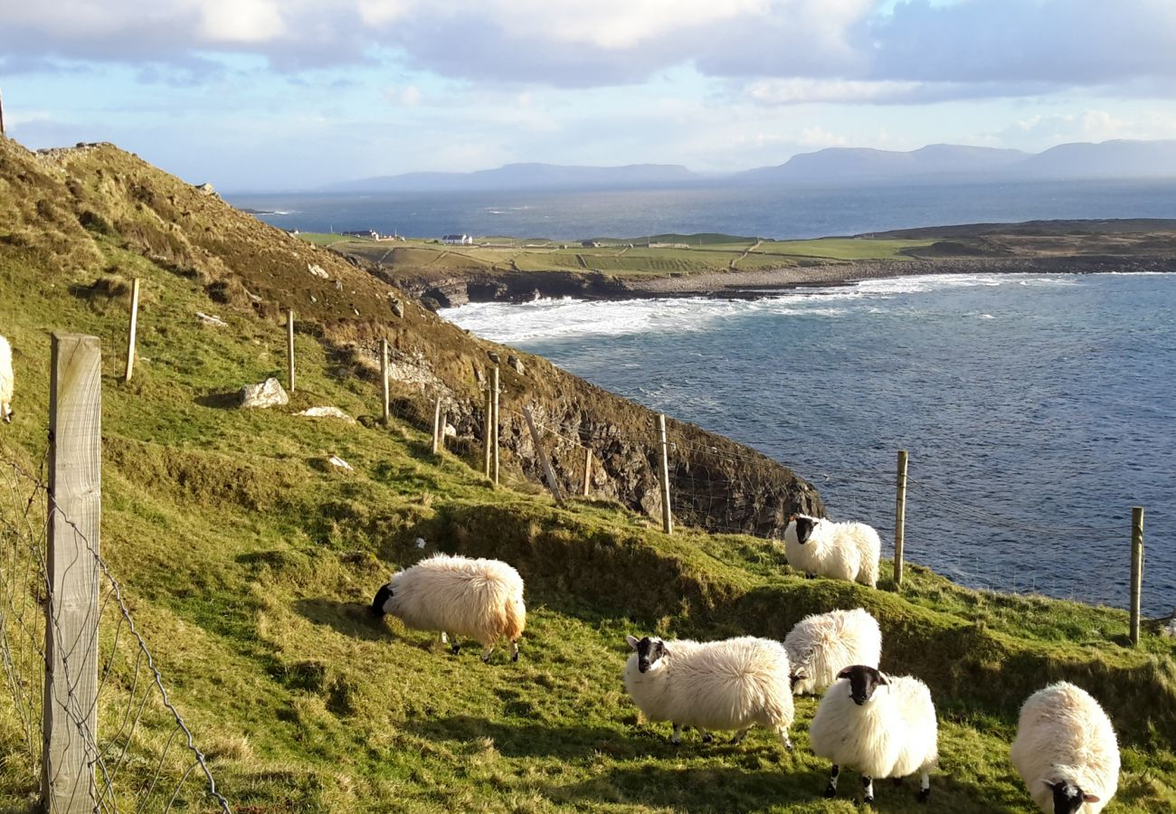 Sheep grazing, County Donegal, Ireland
