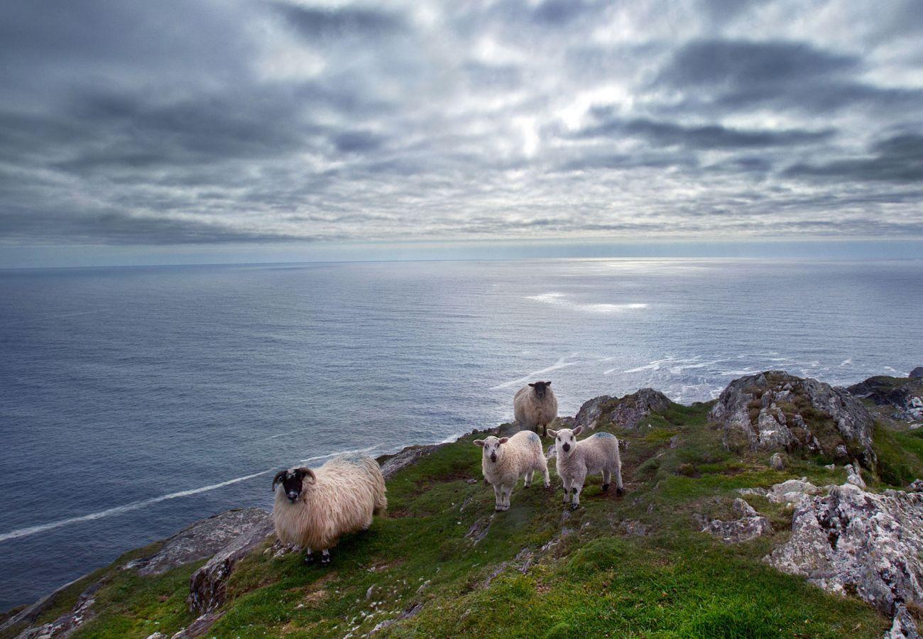 Southern Peninsulas, Sheep's Head, County Cork, Ireland