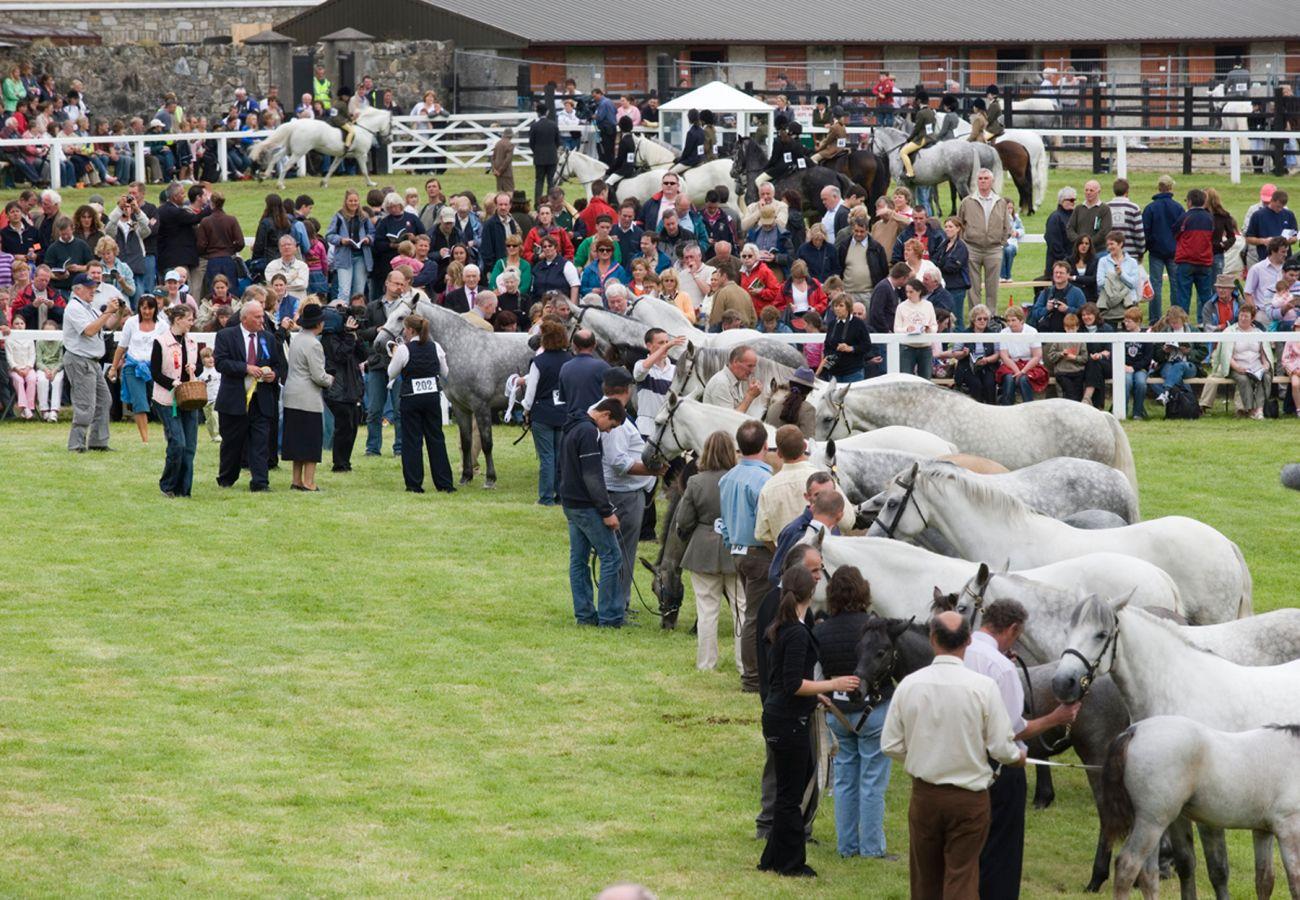 Connemara Pony Show Clifden © Failte Ireland