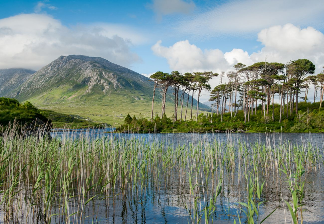 Pine Island Derryclare Lough Galway © Tourism Ireland
