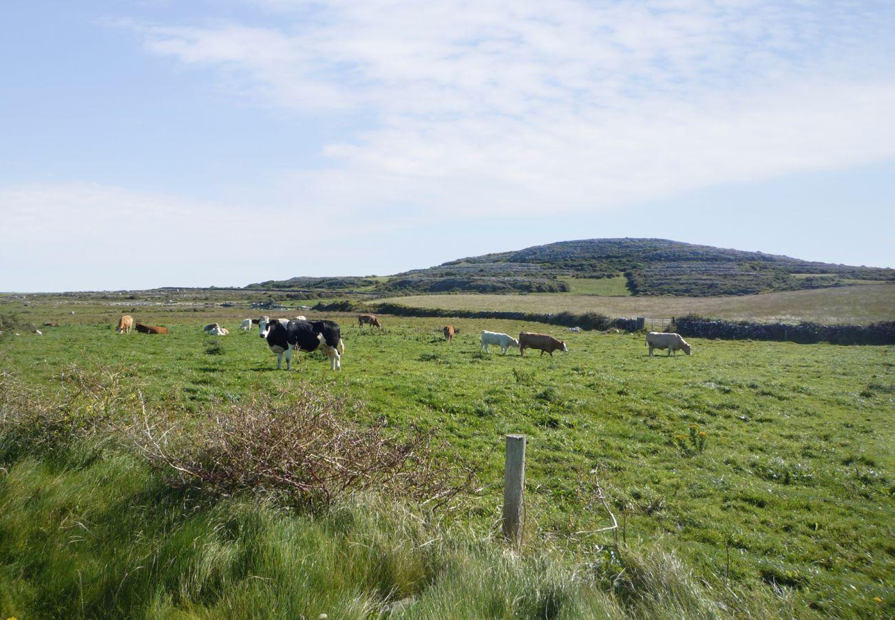 Rolling Fields of County Clare, Ireland