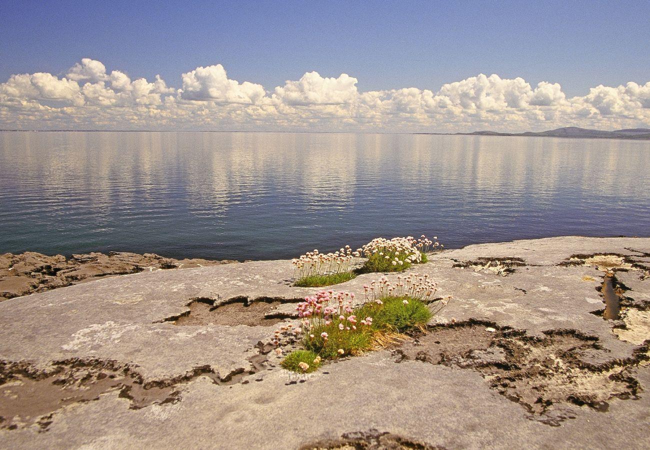 The Burren County Clare © Failte Ireland