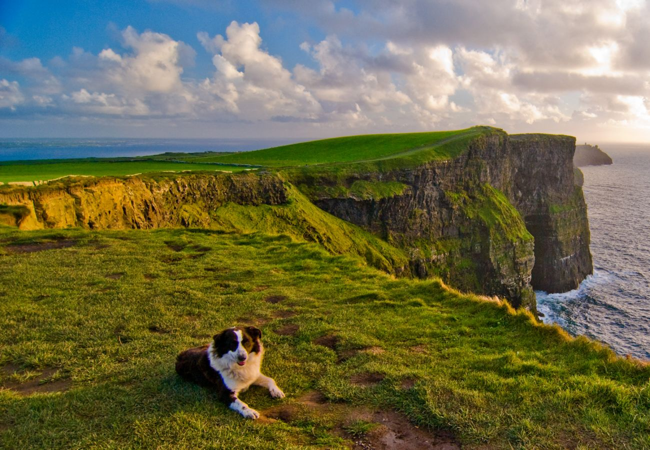 Timmy the dog Cliffs of Moher County Clare