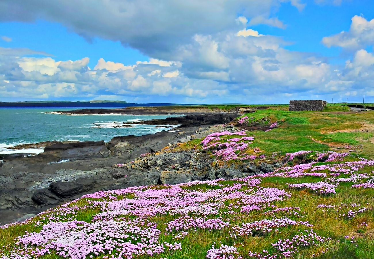 Sea Pinks at Hook Head, Wexford near Aurtherstown © Hook Tourism