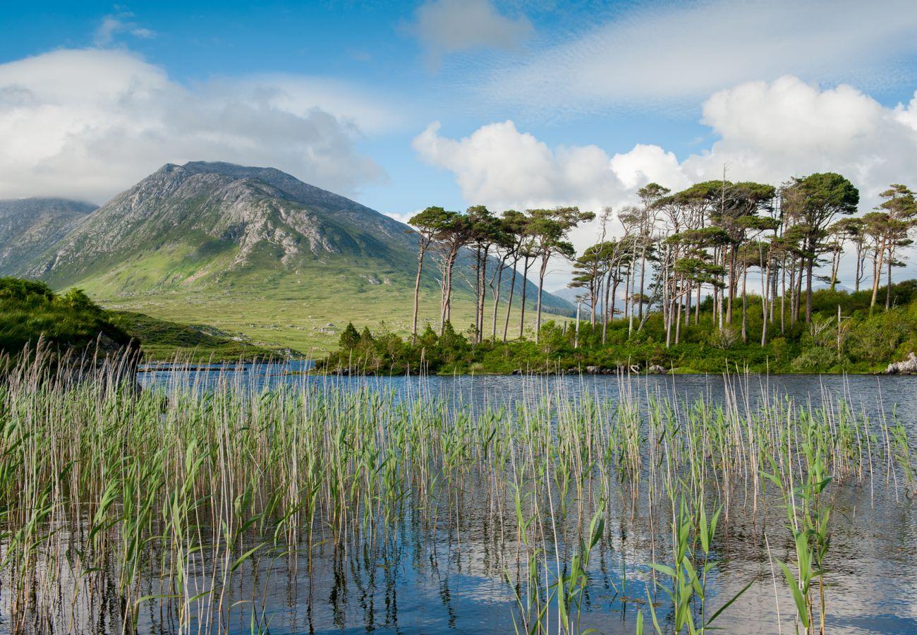 Pine Island, Derryclare Lough, County Galway © Big Smoke Studio