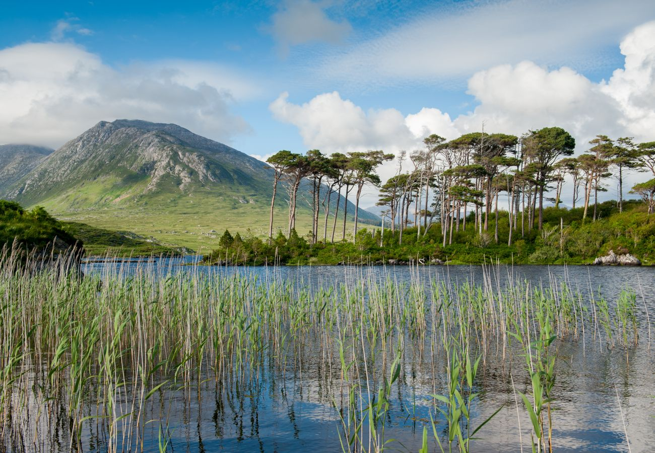 Pine Island, Derryclare Lough, County Galway © Big Smoke Studio