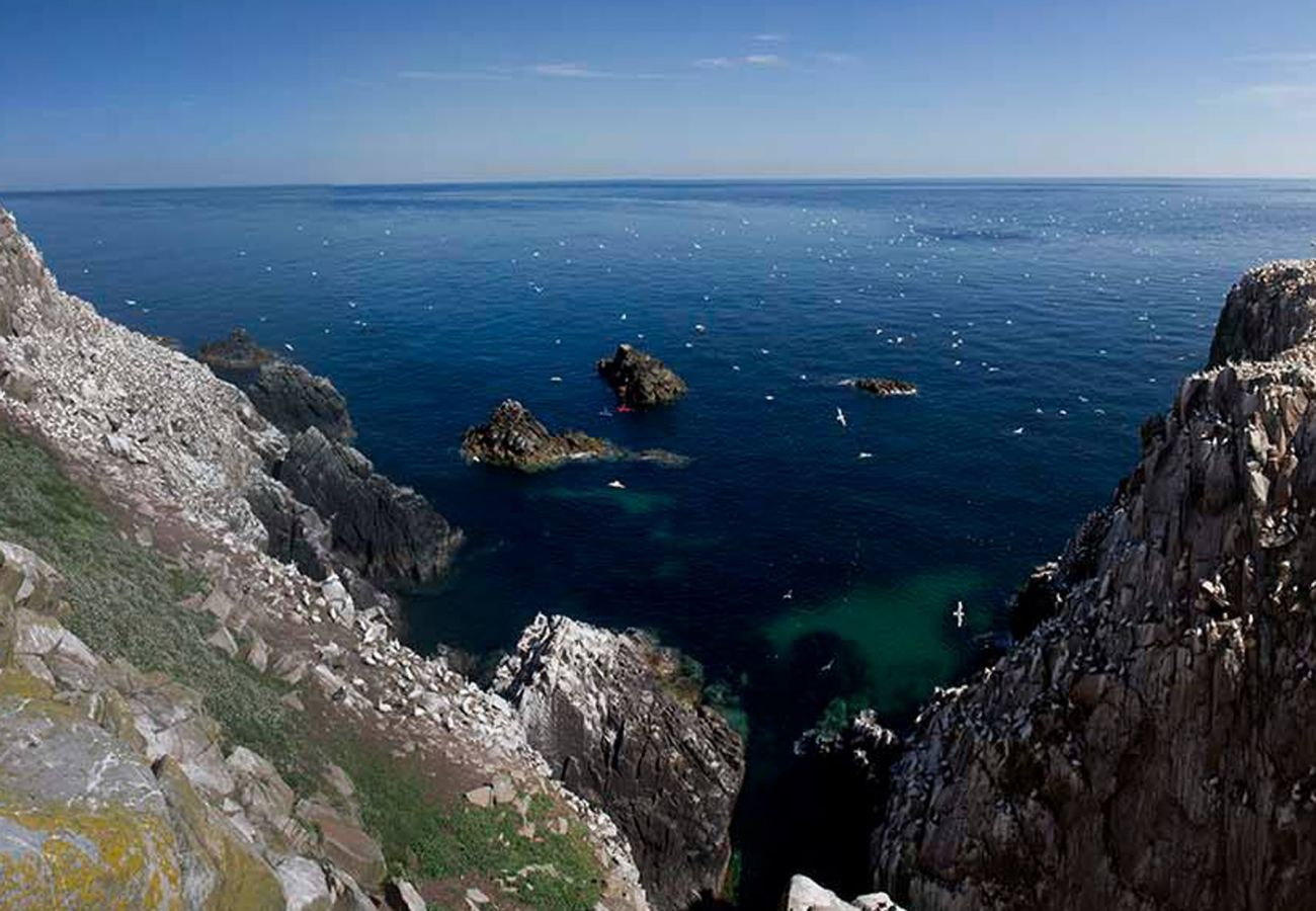 The Saltee Islands County Wexford image Tourism Ireland
